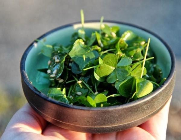 Sauerampfer bekämpfen Oxalis in Salaten mit natürlichen Hausmitteln und umweltfreundlichen Methoden