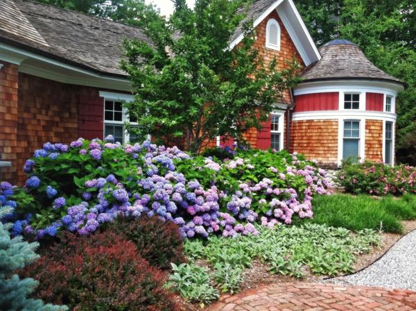 Beautiful Hydrangea Garden in Front of Country Cedar House