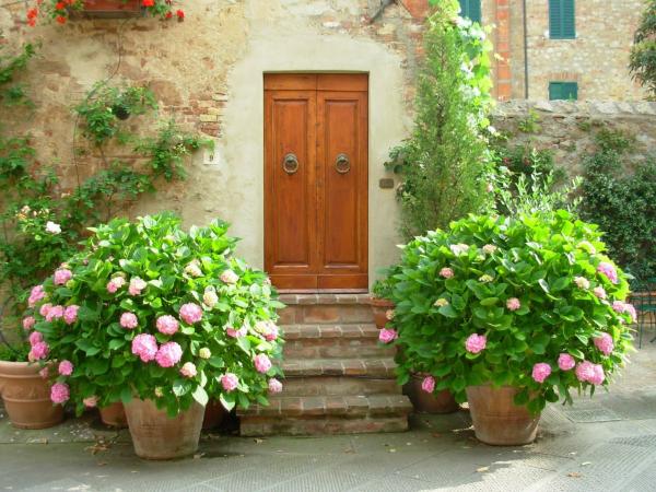 Hortensien zum Blühen bringen Hortensien im Kübel an einem geschützten Ort vor der Haustür überwintern