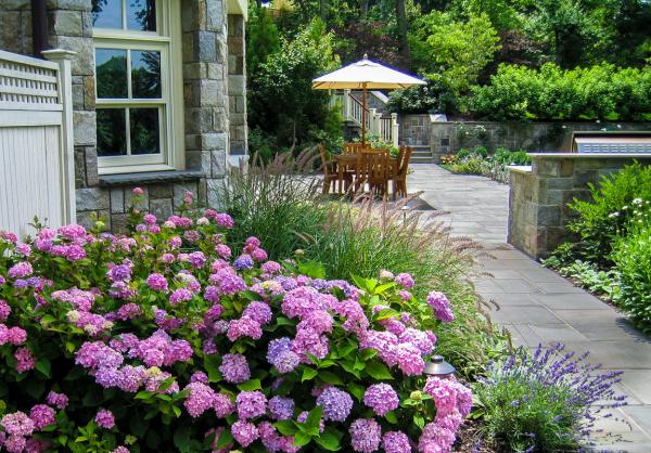 Hortensien zum Blühen bringen rosa Blüten im Garten pH-Wert Boden Standort ideal