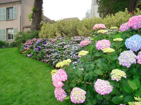 Hortensien zum Blühen bringen schöner Garten grüner Rasen ein Streifen blühender Hortensien unterschiedliche Farben