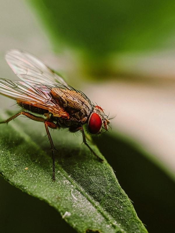 Natürliche Methoden und Hausmittel gegen Fliegen, sowie weitere hilfreiche Tipps zum Fliegen im Garten und zu Hause
