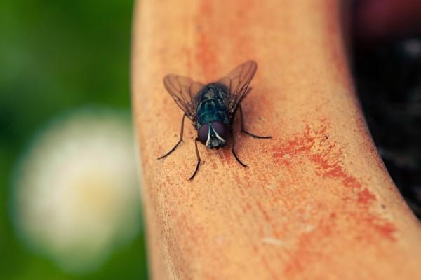 Natürliche Methoden und Hausmittel gegen Fliegen, sowie weitere hilfreiche Tipps gegen Fliegen im Garten