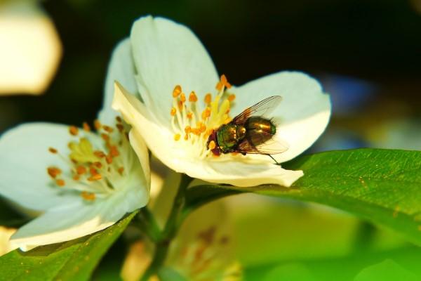Natürliche Methoden und Hausmittel gegen Fliegen, sowie weitere hilfreiche Tipps Fliegen in der Natur