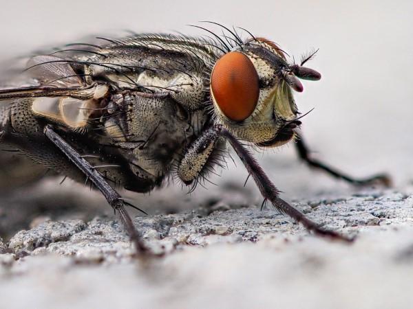 Natürliche Methoden und Hausmittel gegen Fliegen, sowie weitere hilfreiche Tipps zum Fliegen aus nächster Nähe