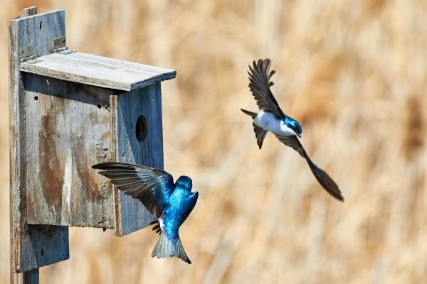 Natürliche Methoden und Hausmittel gegen Fliegen, sowie weitere hilfreiche Tipps zum Schlucken von Nestinsekten