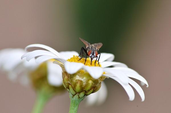 Natürliche Methoden und Hausmittel gegen Fliegen, sowie weitere hilfreiche Tipps wichtige Rolle der Fliegen