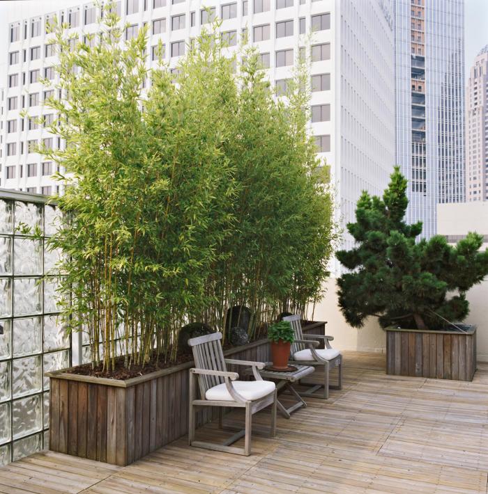 Trocknungskünstler im Garten Bambus im Kübel als Sichtschutz auf der Dachterrasse in der Großstadt