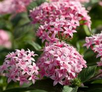 Schönste Trockenkünstler im Überblick: welche Gartenpflanzen gedeihen gut in der Sommerhitze?