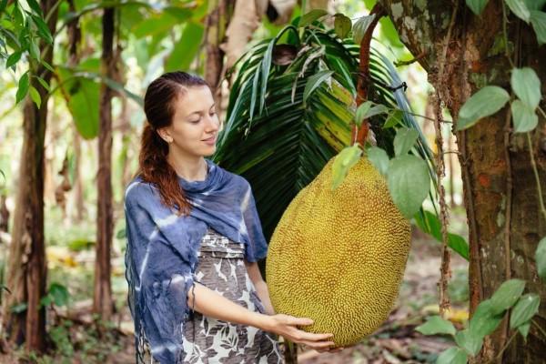 Vegane Jackfruit Rezepte und Wissenswertes über den exotischen Fleischersatz riesige frucht exotisch