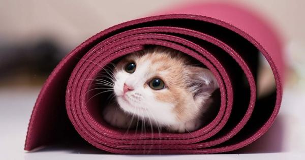 Καθαρισμός και απολύμανση του στρώματος γιόγκα Καθαριστική γάτα