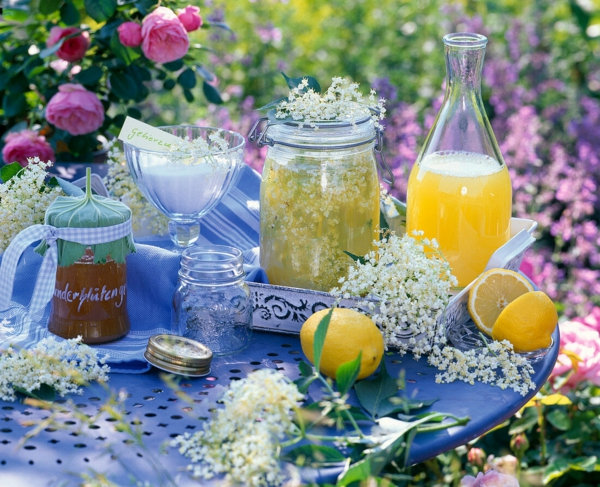 holunderblütengelee sommer frühstück