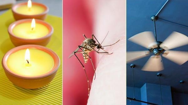 mücken vertreiben hausmittel ideen