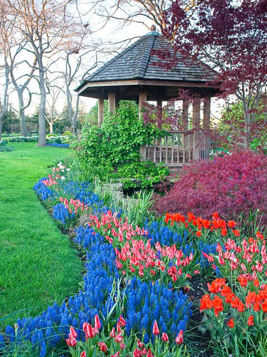 mehr Farbe in den Garten bringen blaue Hyazinthen und rosa und rote Tulpen in Streifen gepflanzt einen schönen Eindruck machen