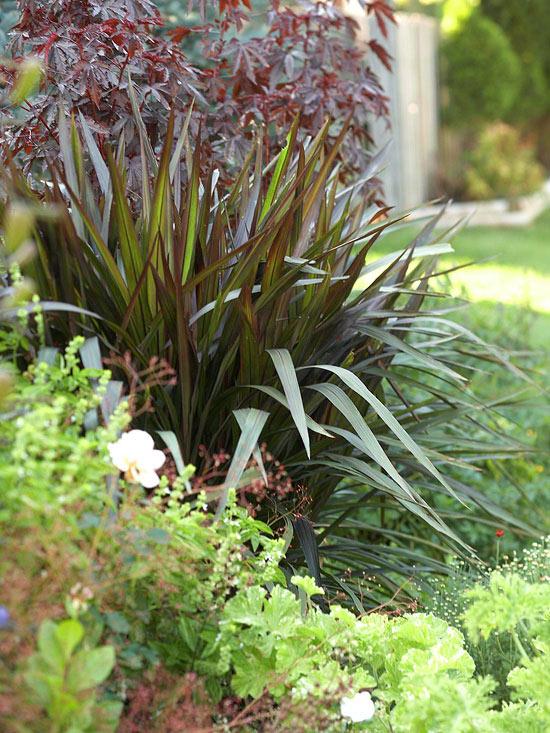 mehr Farbe in den Garten bringen dürretolerante Gartenpflanzen Yuca dunkelgrüne elegante lange Blätter