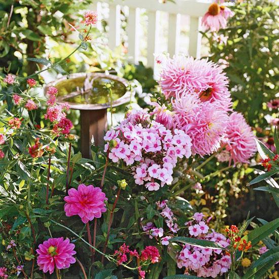 mehr Farbe in den Garten bringen dunkles Grün verschiedene rosa Blüten typisch für den Bauerngarten