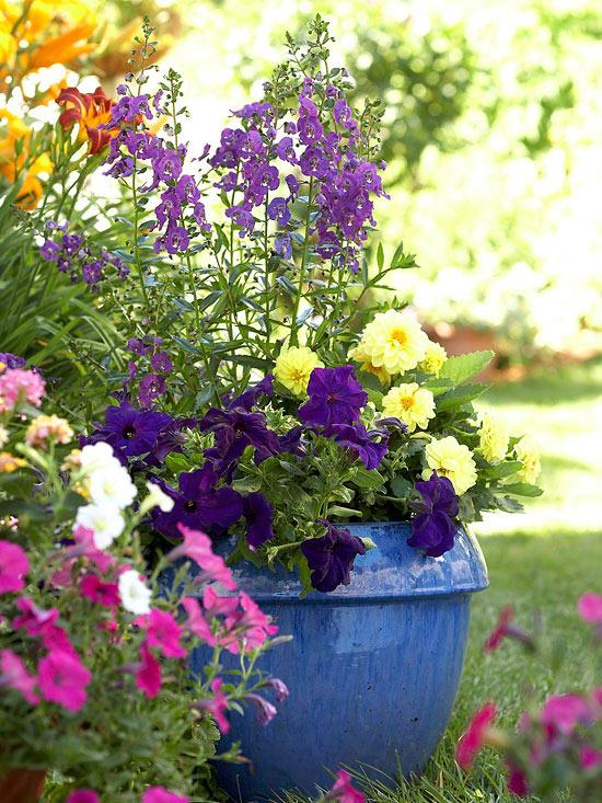 mehr Farbe in den Garten bringen ein großer marineblauer Keramiktopf farbenfrohe Petunien