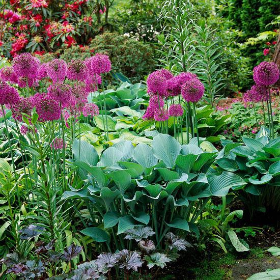 mehr Farbe in den Garten bringen sattes Grün und violette Blüten im Kontrast