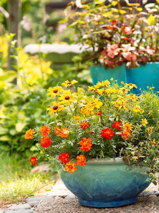 mehr Farbe in den Garten bringen sonnengelbe und orangefarbene Blüten Attraktion im Blumenbehälter
