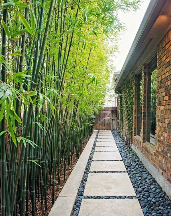 natürlicher Sichtschutz Bambus natürlich frisch naturnah