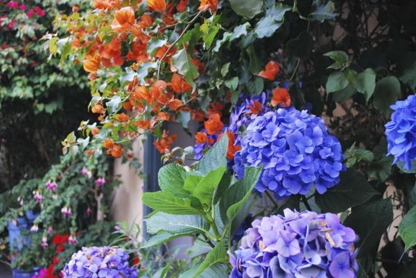 natürlicher Sichtschutz blühende Gartenhecke Hortensien