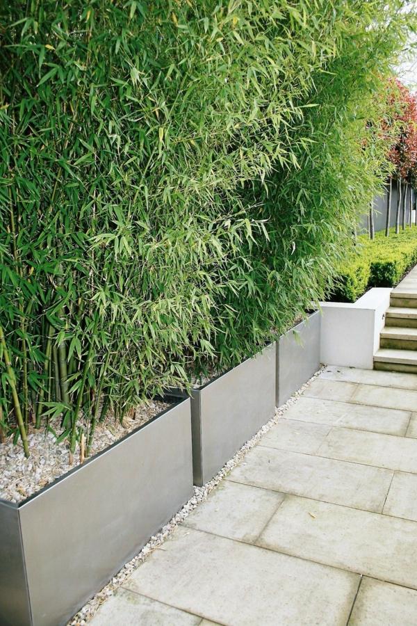 natürlicher Sichtschutz frische Gartenideen viel Grün