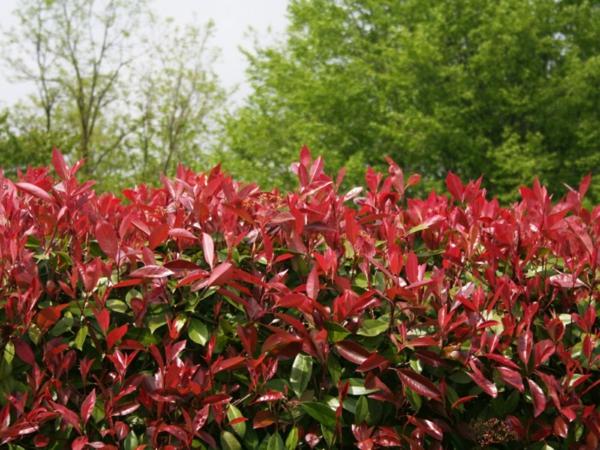natürliche Sichtschutzgestaltung frische Ideen im Garten