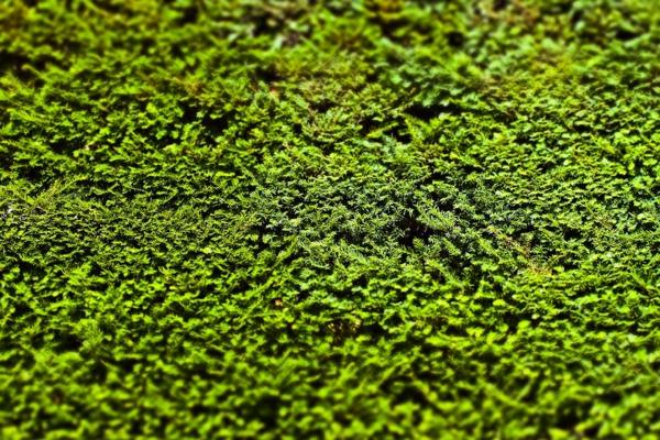 natürlicher Sichtschutz Garten Buchsbaum immergrüne Pflanzen