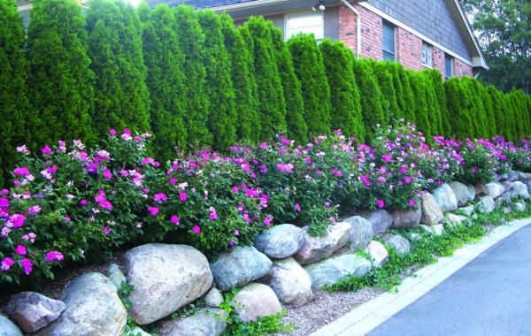 Natürlicher Sichtschutz Gartendekoration Ideen Gartenpflanzen