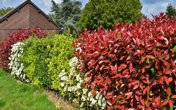 natürlicher Sichtschutz Gartenhecke verschiedene Pflanzenfarben