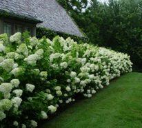 Natürlicher Sichtschutz bringt ein frisches Flair in den Garten