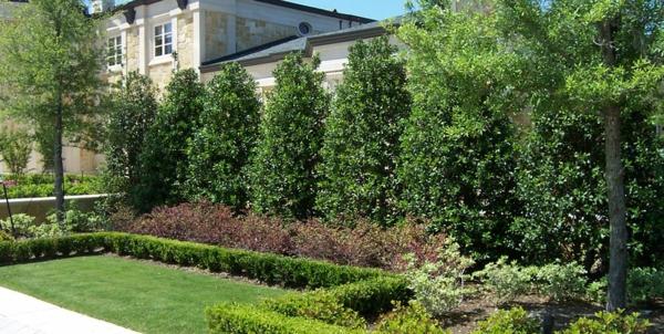 natürlicher Sichtschutz immergrüne Pflanzen schützen die Privatsphäre