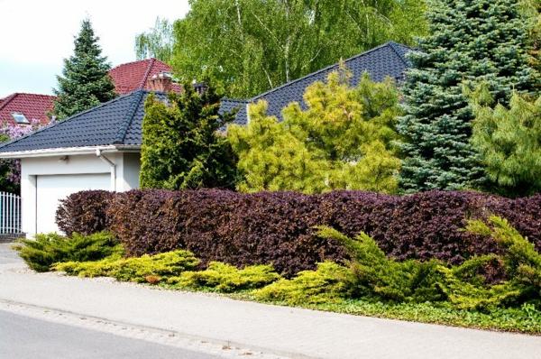 natürlicher Sichtschutz Vorgarten Ideen Sträucher Bäume
