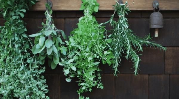 pflanzen gegen mücken tipps