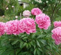 Romantische Blumen machen den Garten zu einem Ort zum Genießen