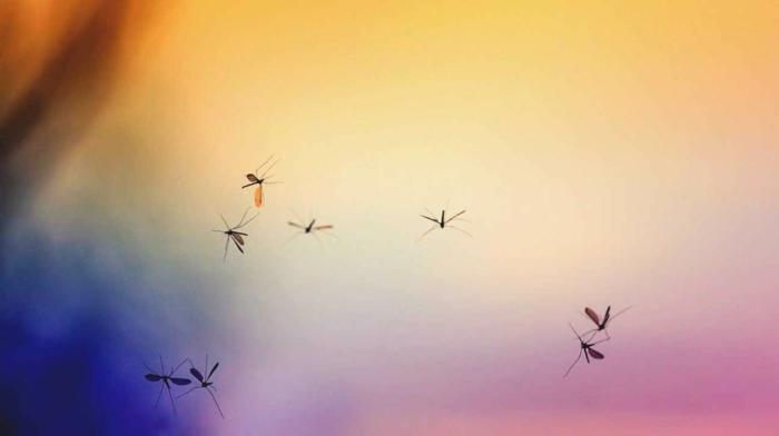 was zieht muecken an lieben zu fliegen im regen
