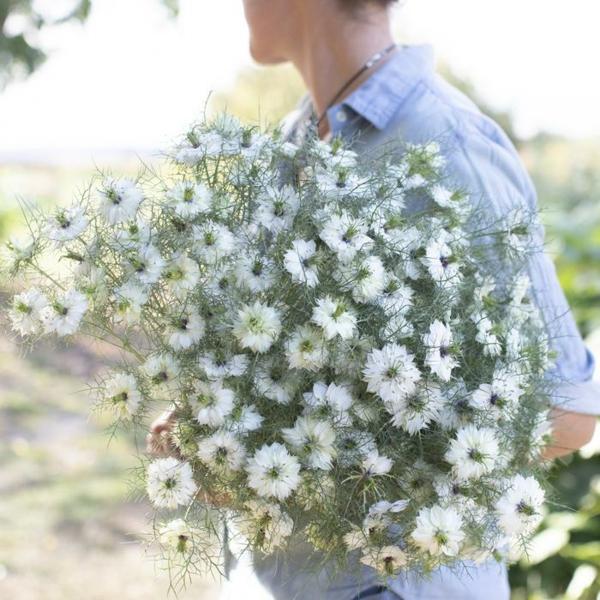 weiße blüten nigella damascena