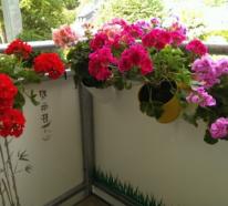Herrliche Balkonblumen für Faule – eine Liste mit 3 Favoriten