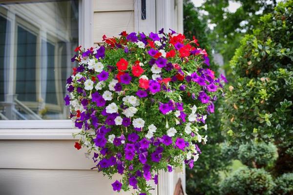 Balkonpflanzen für Faule bunte Petunien am Balkongeländer im Kasten toller Blickfang Genuss für Augen und Seele
