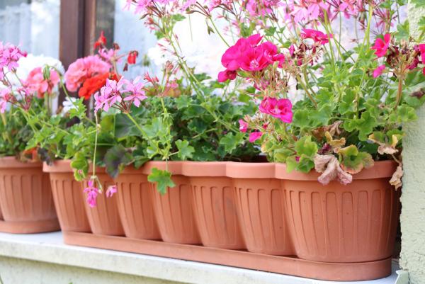 Balkonpflanzen für Faule farbenfrohe Geranien in Balkonkasten schöner Anblick