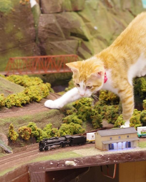 Construa um diorama - ideias criativas e dicas para artistas e amadores