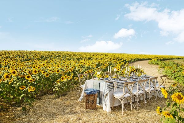 Esstisch Sonnenblumen Felder