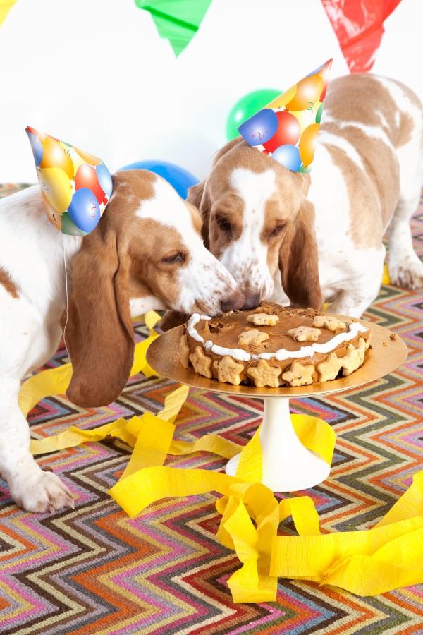 Gesunde Hundekuchen Rezeptideen, die Bello glücklich machen hunde geschwister ideen