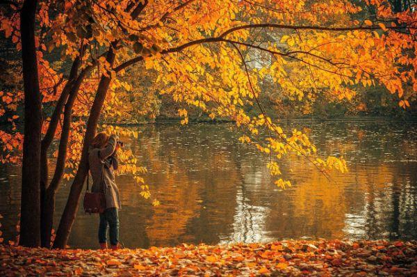 Herbstblätter Landschaften Tipps und Trends