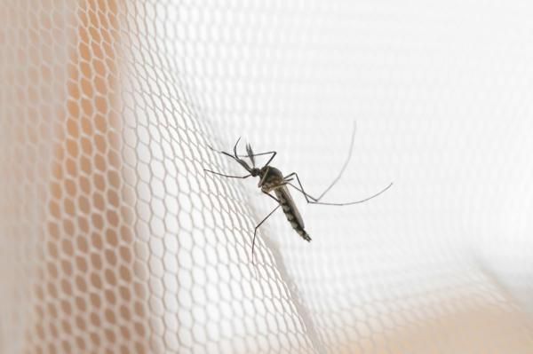 Pó de café, um remédio caseiro natural para os mosquitos