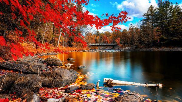 See im Herbst gesundes Leben