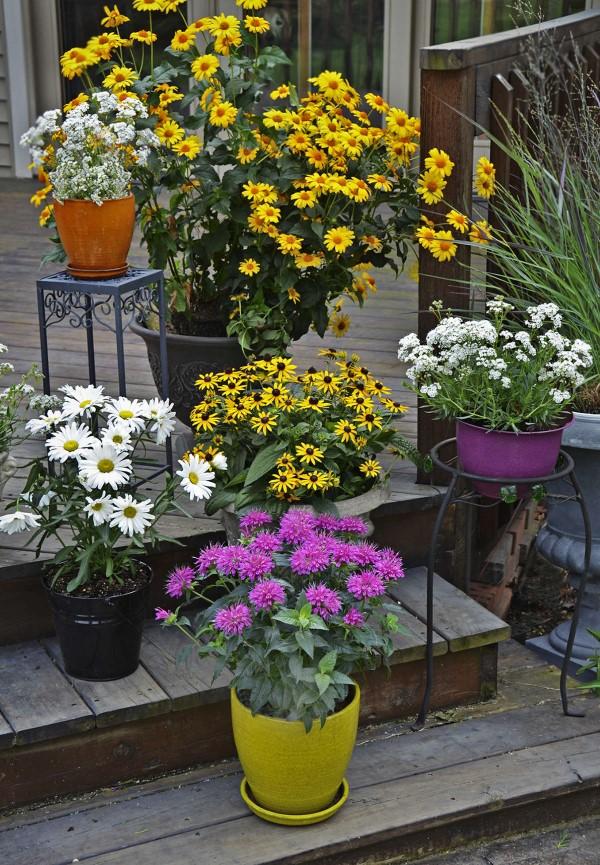 Sonnenhut Pflanze – Wissenswertes und Pflege Tipps rund um den Sommerblüher zierpflanzen balkon ideen
