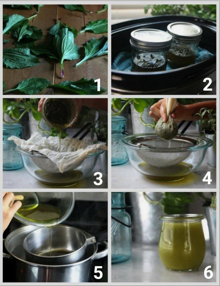 Spitzwegerich Salbe, Tee oder Hustensaft anleitung schritt für schritt