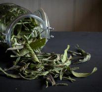 Wie bereitet man Spitzwegerich Salbe, Tee oder Hustensaft zu?