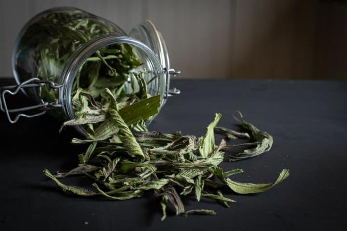 Spitzwegerich Salbe, Tee oder Hustensaft hausgemacht erste hilfe